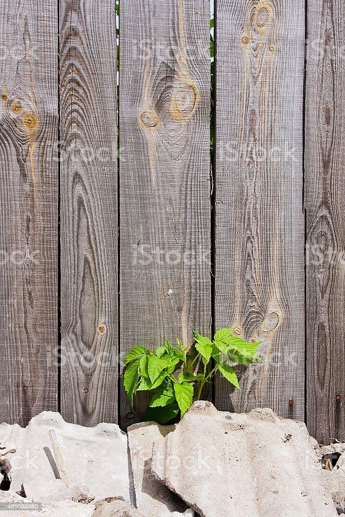 Follaje raspberries sobre fondo de madera vintage con espacio de copia foto de stock libre de derechos