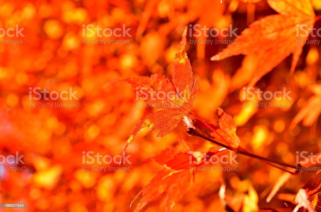Foliage season of Mt. Takao stock photo