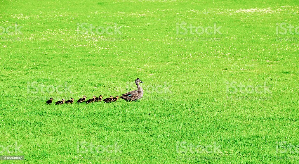 Follow the Leader stock photo