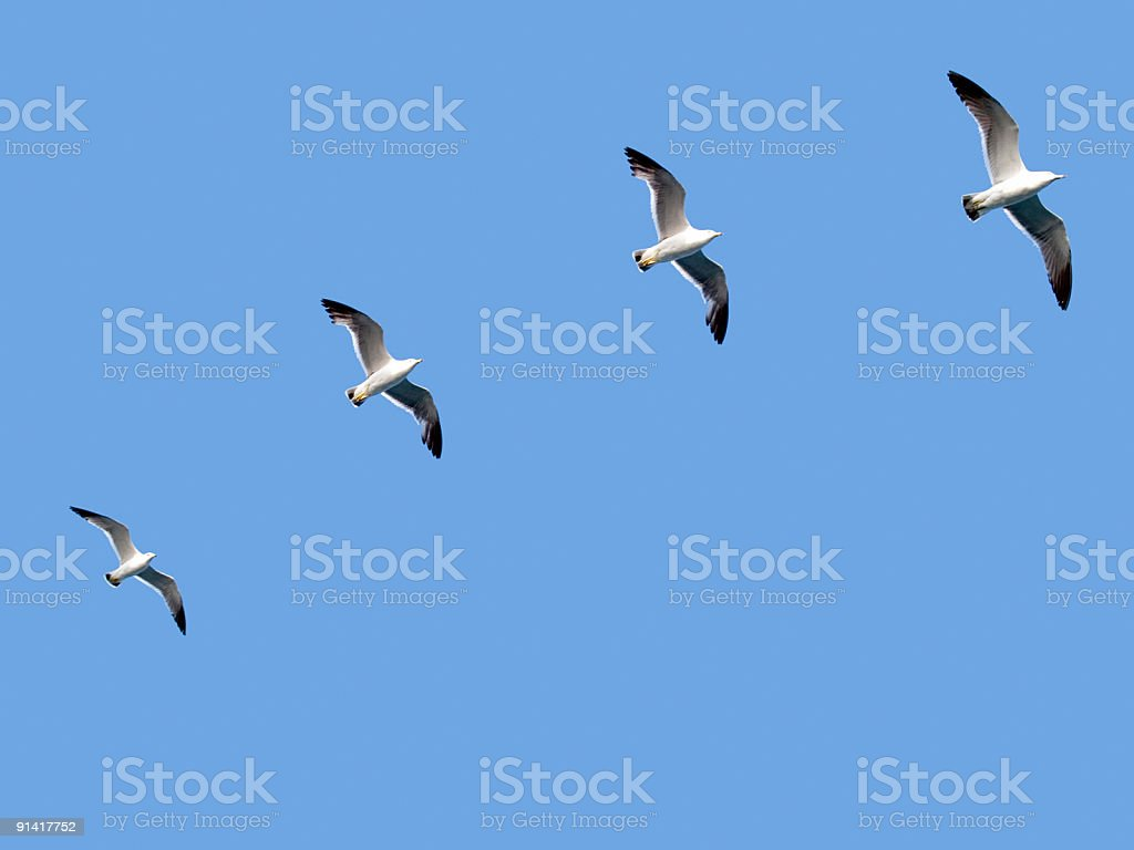 follow the leader. team concept royalty-free stock photo