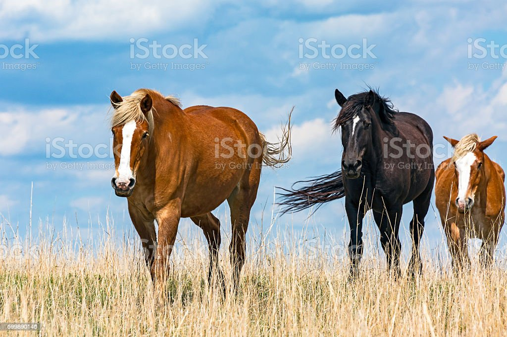 Follow the leader – three horses in paddock stock photo