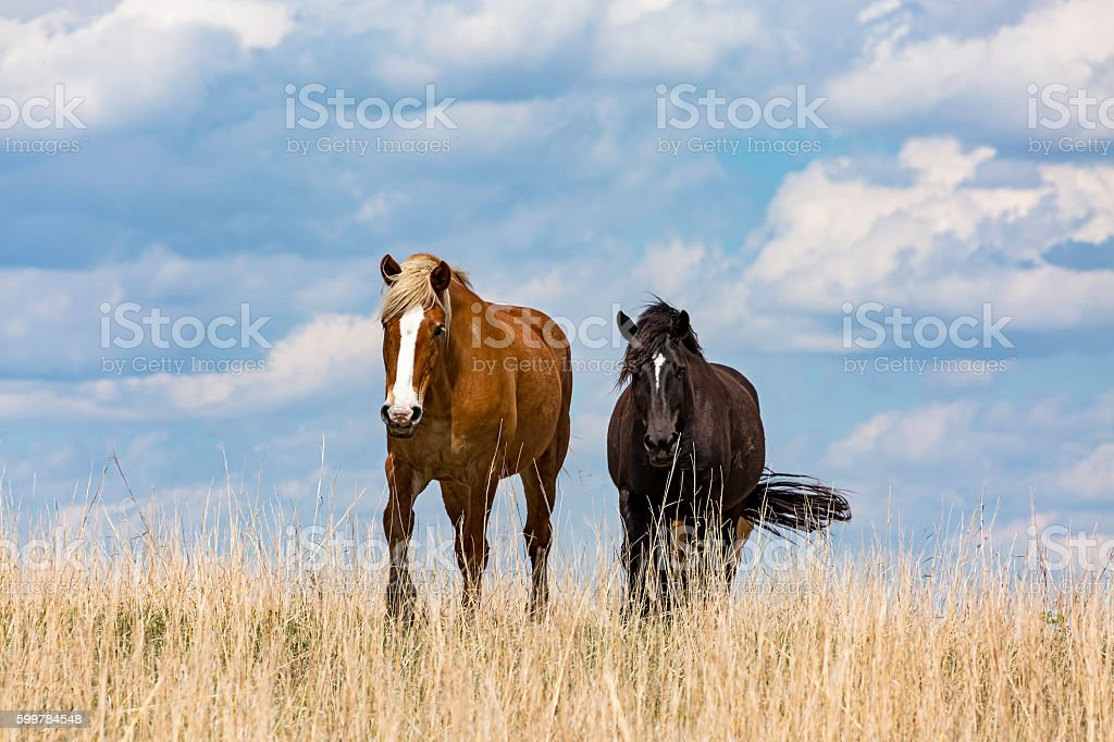 Follow the leader – two horses in a paddock stock photo