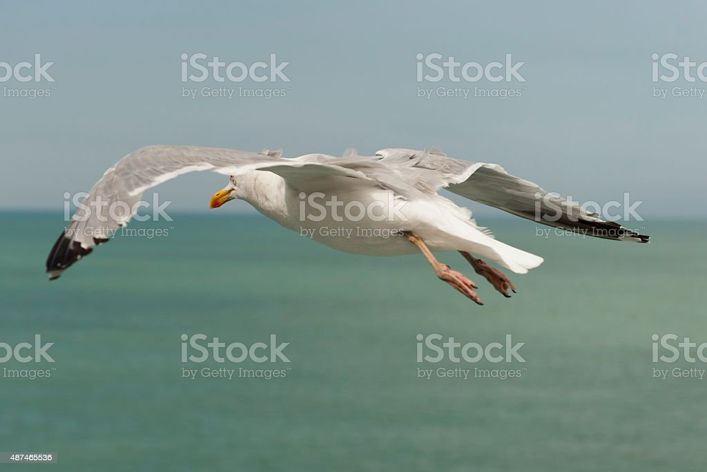 following a seagull who is flying next to me stock photo