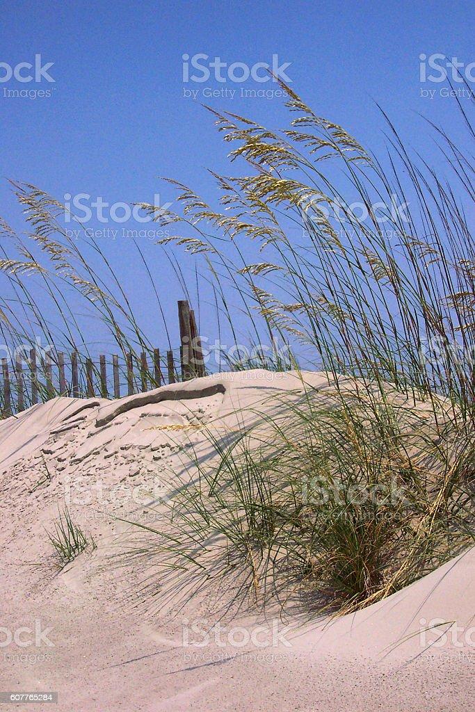 Folly Beach Dunes stock photo