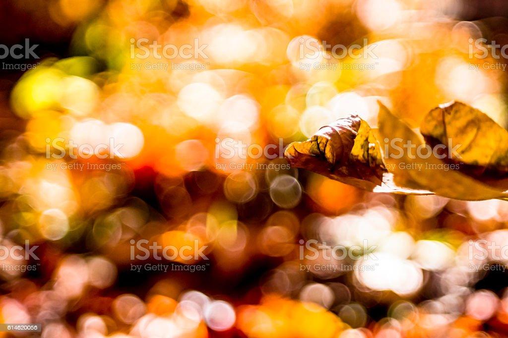 Fond ambré stock photo