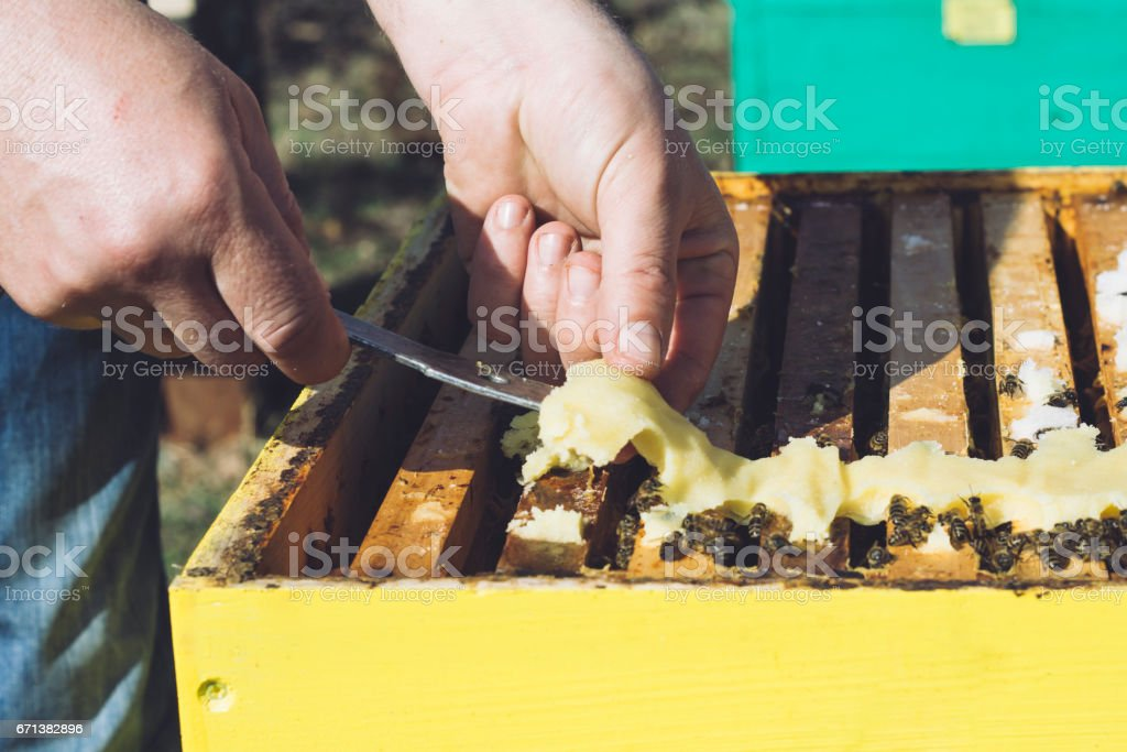 Food for bees.Apiarist. stock photo
