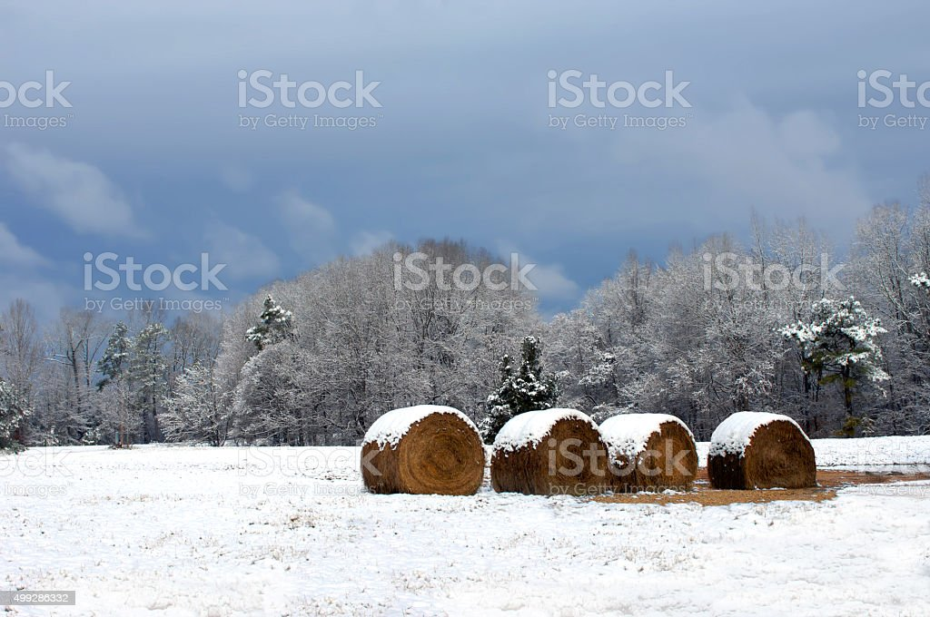 Food for Winter stock photo