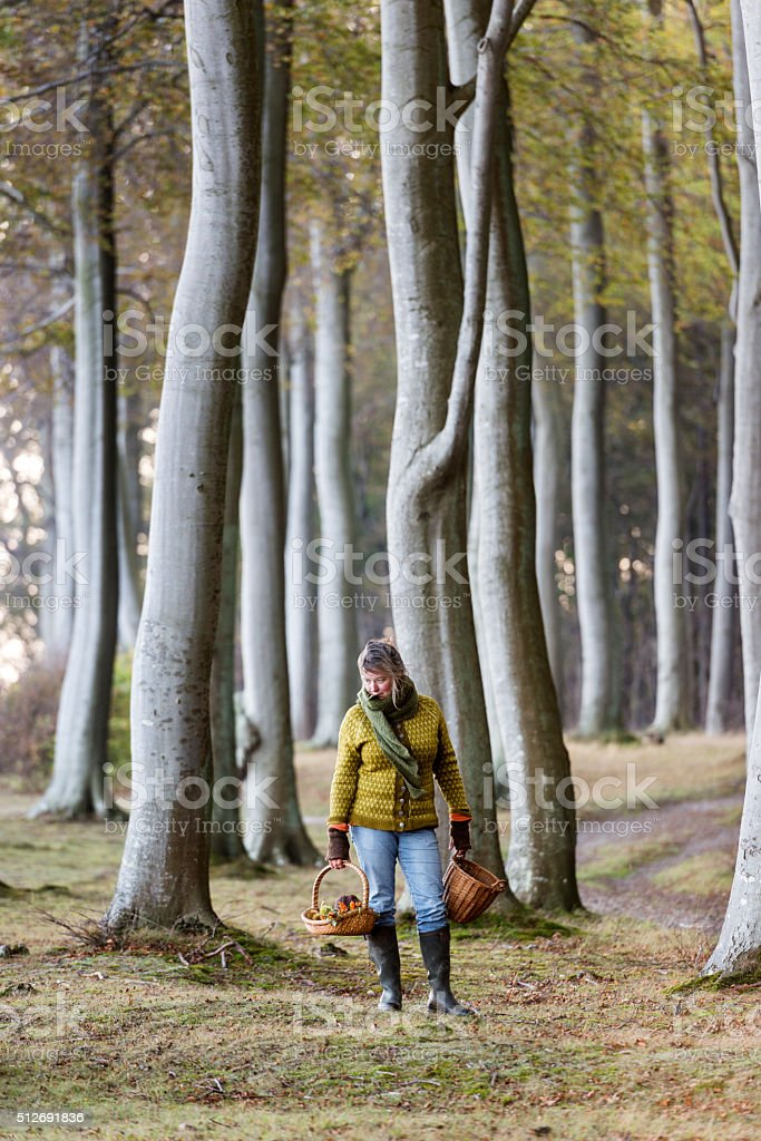 Food Forager at Work in the Forest stock photo