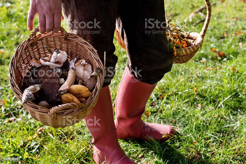 Food Forager Carrying Her Finds Home stock photo