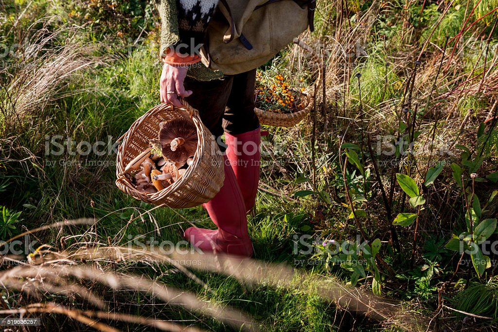 Food Forager stock photo