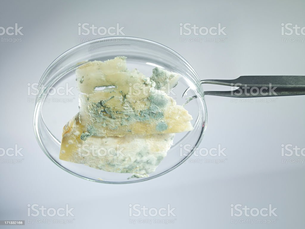 Food Safety royalty-free stock photo