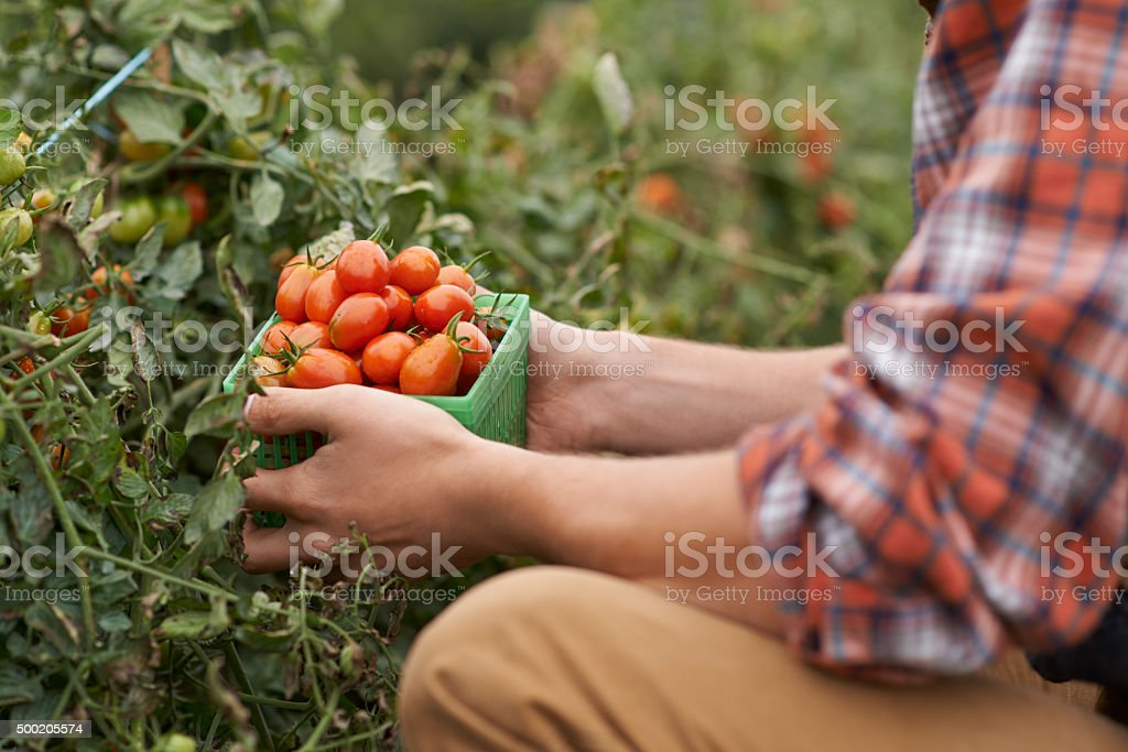 Food tastes better when you grow it yourself stock photo