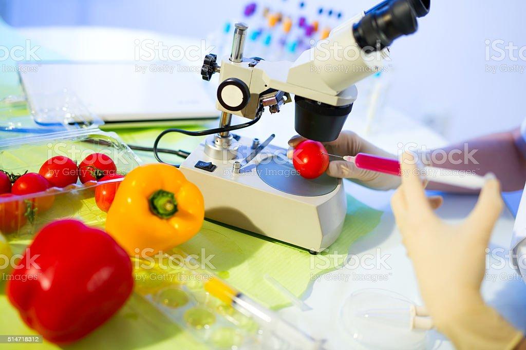 Food testing in the laboratory. GMO food stock photo