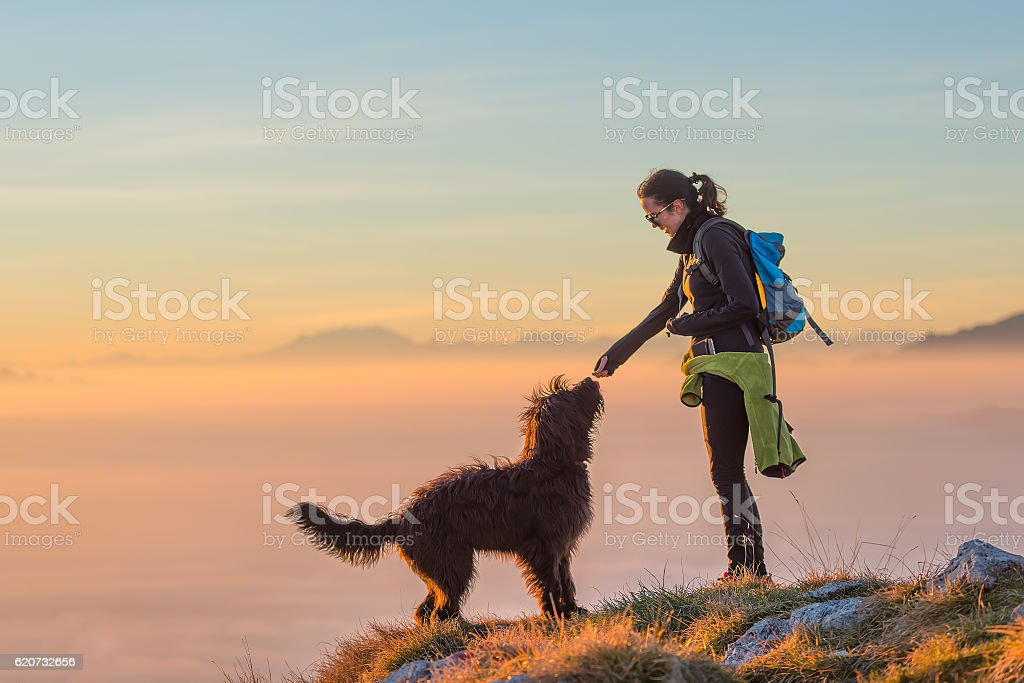 Food to the dog of a girl during an excursion stock photo