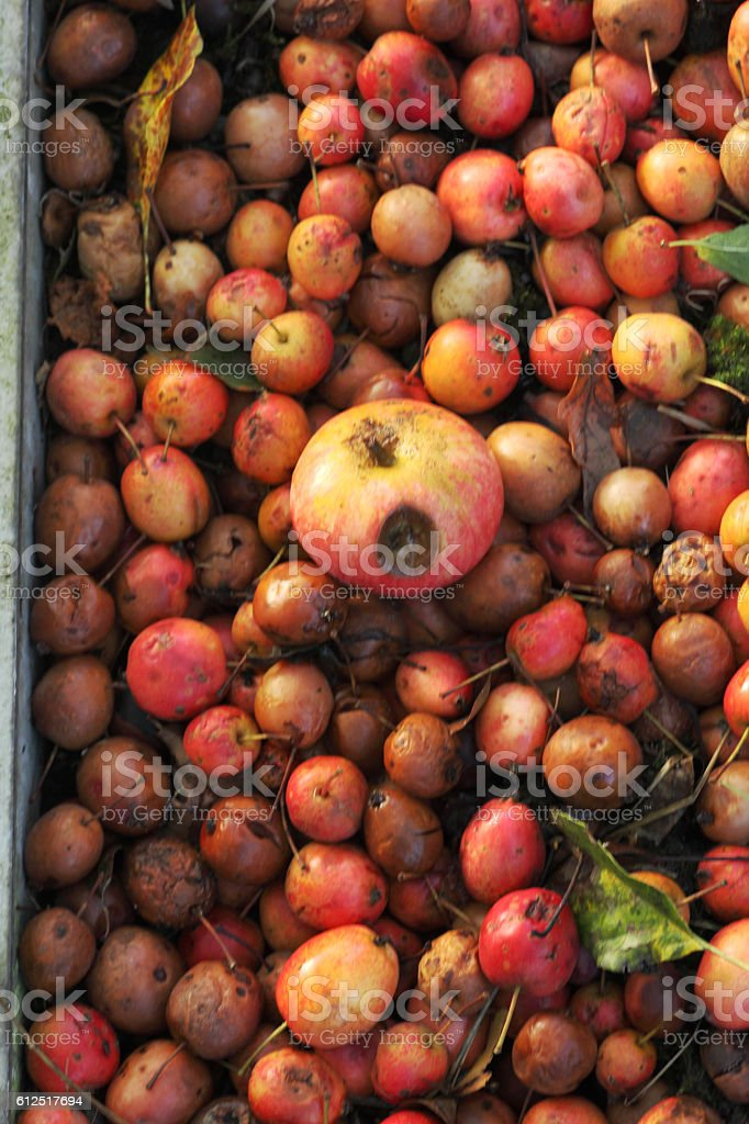 Food waste stock photo