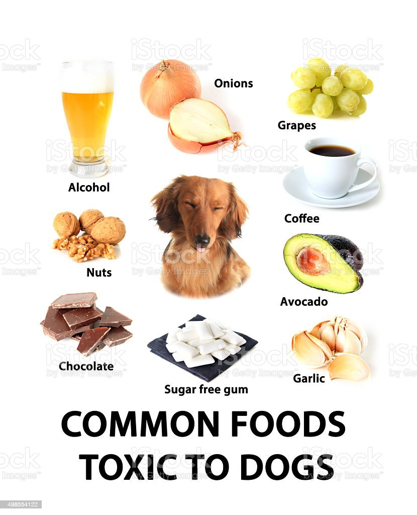 Foods toxic to dogs stock photo