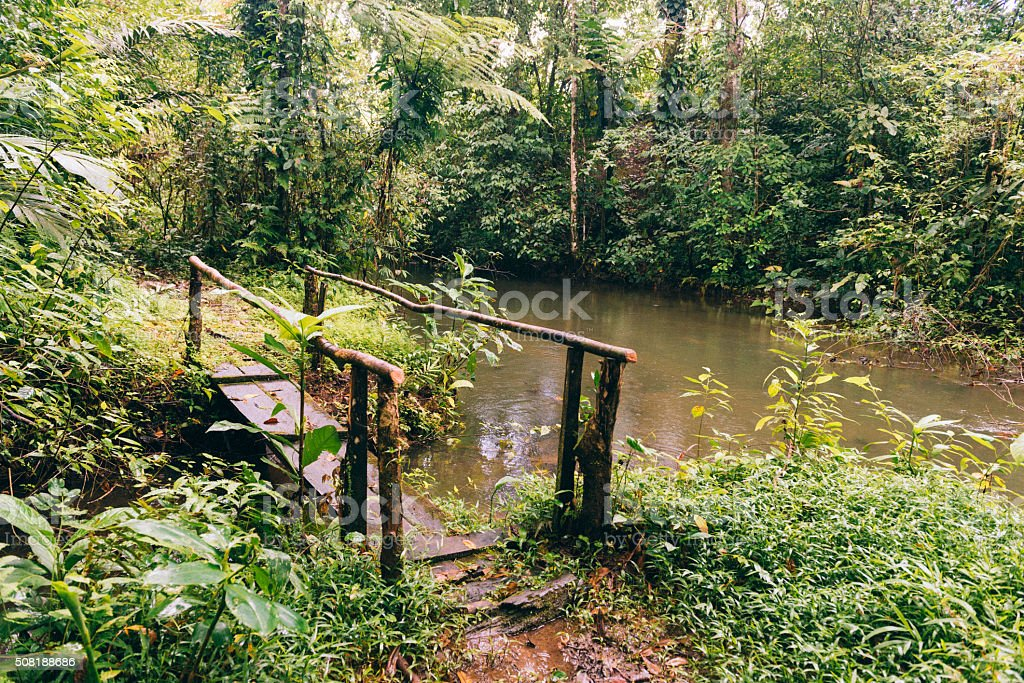 Foot Bridge Off the Beaten Path in Costa Rica Rainforest stock photo