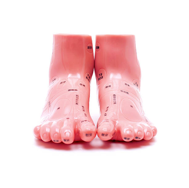 Foot Diagram Pressure Points Pictures Images And Stock Photos Istock