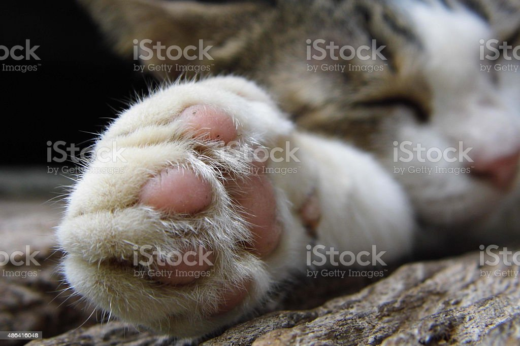 Foot of cat sleep on wooden floor stock photo