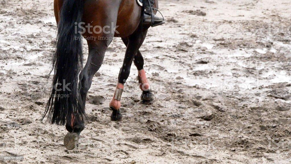 Foot of horse walking on mud. Close up  legs  kicking foto de stock libre de derechos