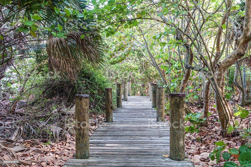 Foot path through the Everglades National Park - MIAMI, FLORIDA Lizenzfreies stock-foto