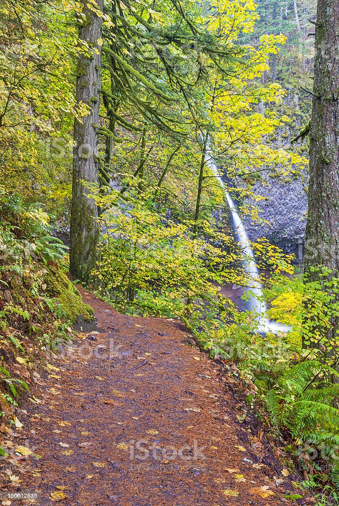 Foot path to Pony Tail falls in Oregon royalty-free stock photo