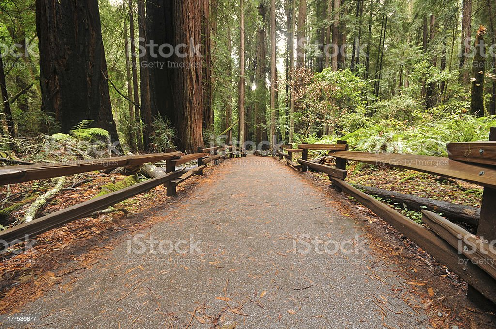 Foot path walkway in forest royalty-free stock photo