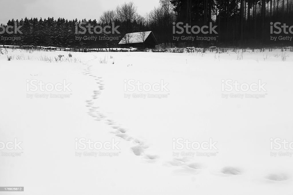 Foot steps in the snow royalty-free stock photo