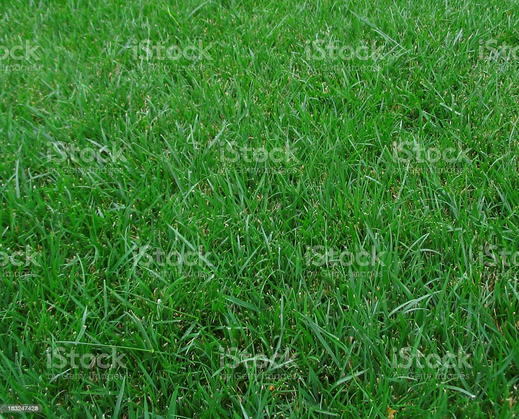 Football, baseball, soccer, golf Grass background royalty-free stock photo