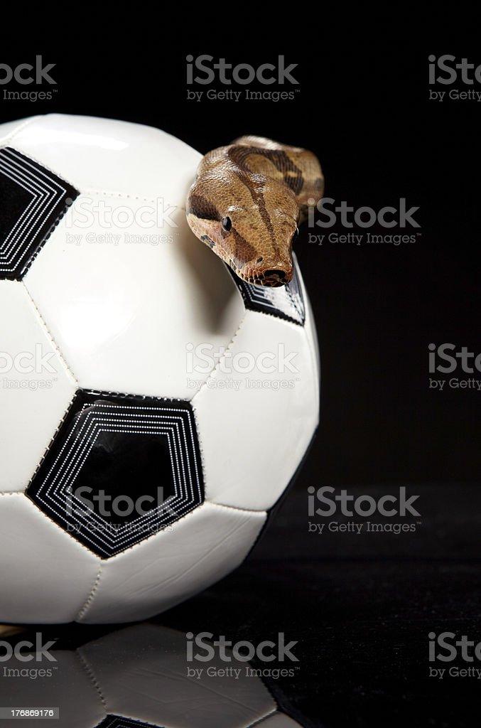 football snake royalty-free stock photo