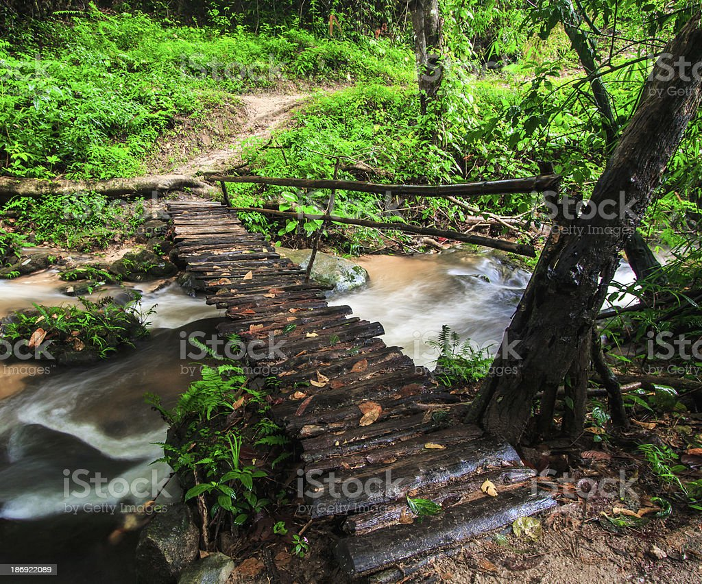 Footbridge across the falls in rainforest royalty-free stock photo