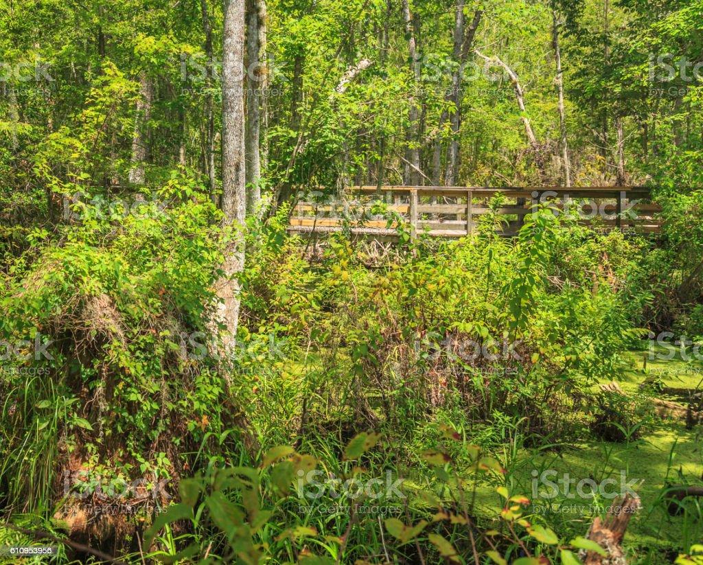 Footbridge crossing Reedy Creek Swamp stock photo