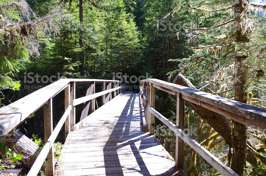 Footbridge in forest stock photo