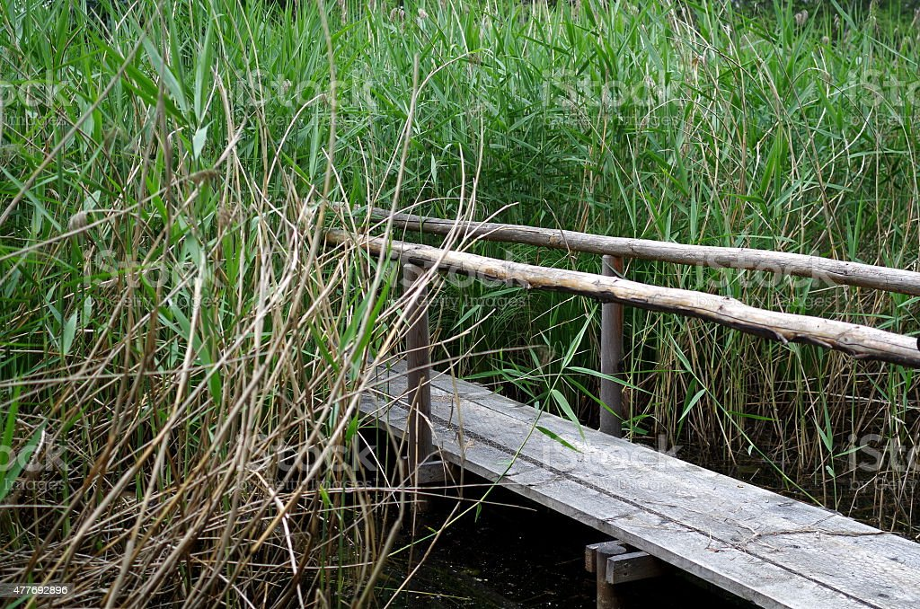 Footbridge into the reeds stock photo