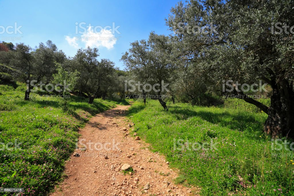 Footpath among the blossoming spring nature. stock photo