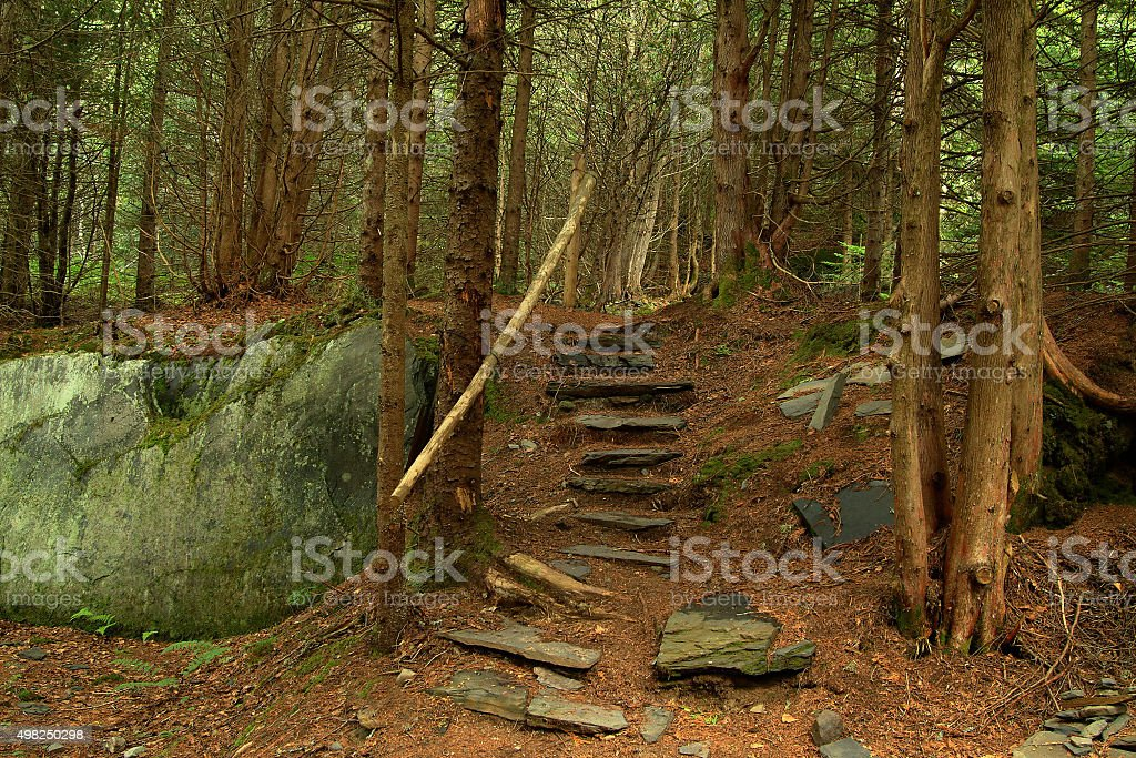 Footpath and stairs through natural green forest. stock photo