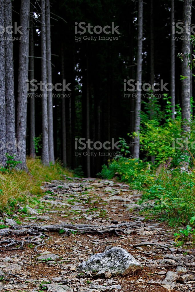 Footpath in a mysterious dark forest royalty-free stock photo