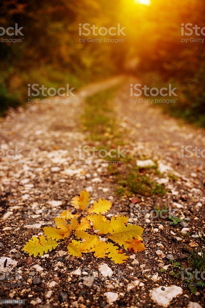 footpath in autumn season stock photo
