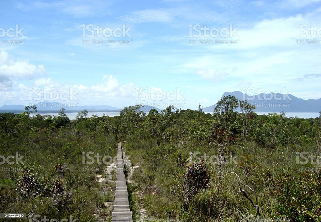 Footpath in Bako national park, Sarawak - Malaysia stock photo