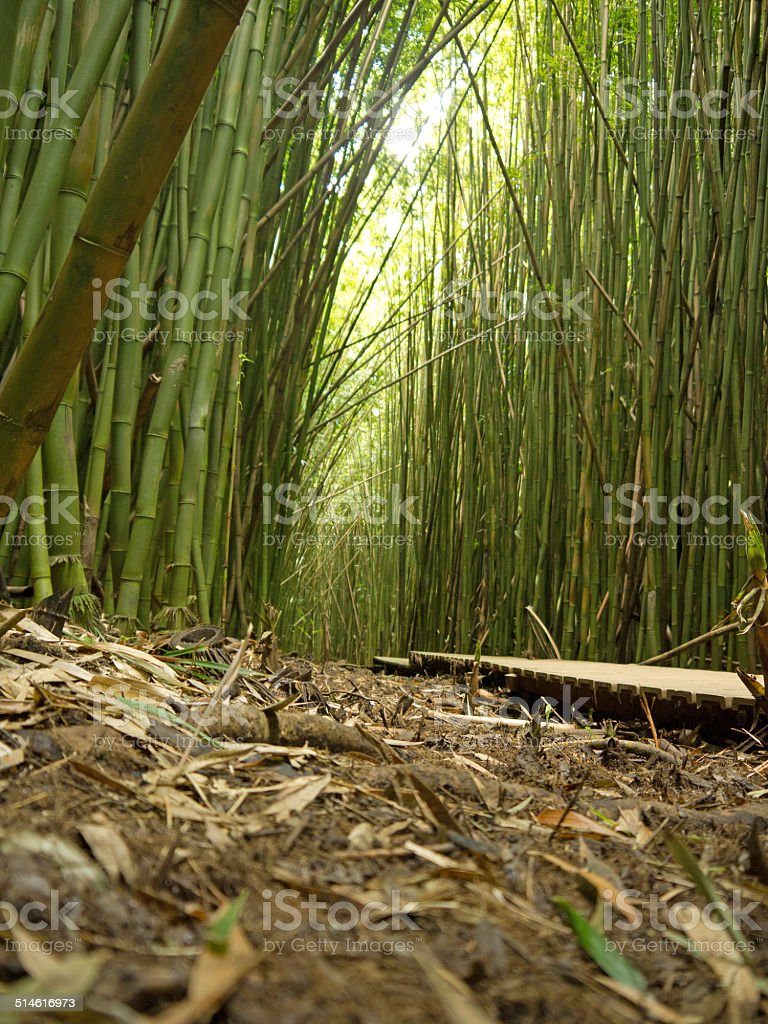 Footpath in Bamboo forest stock photo