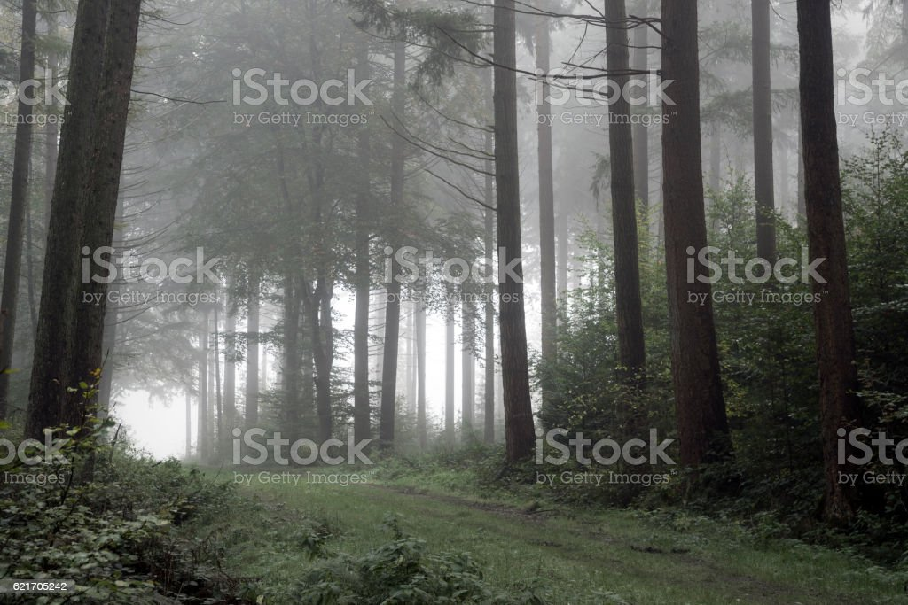 Footpath in dark and misty autumn forest stock photo