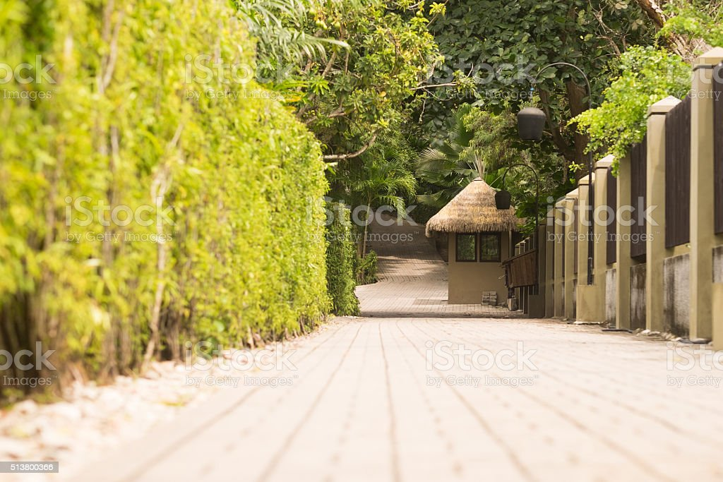 footpath in exotic garden stock photo