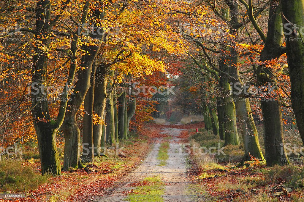 footpath in fall royalty-free stock photo