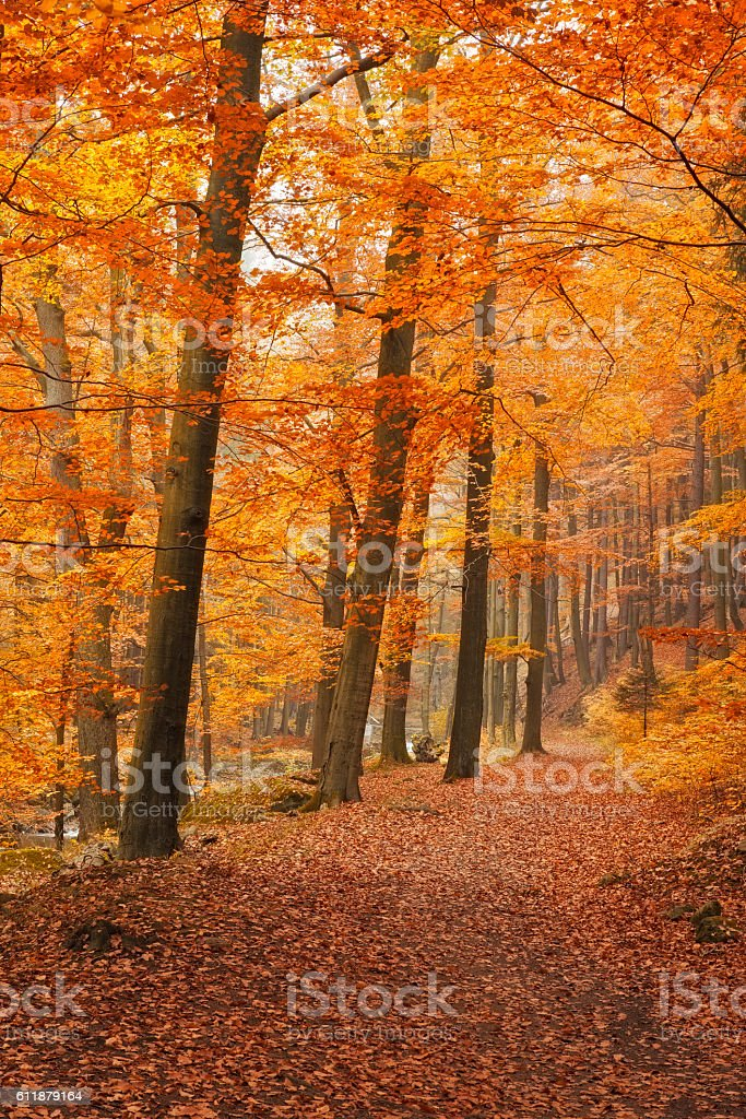 Footpath in Forest at autumn - Nationalpark Harz stock photo