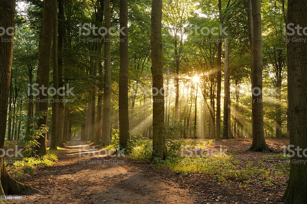Footpath in forest with sunlight. stock photo