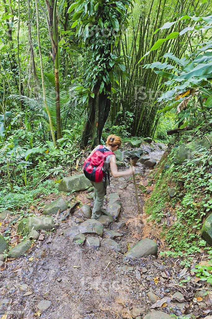 Footpath in Grand Etang National Park, Grenada royalty-free stock photo