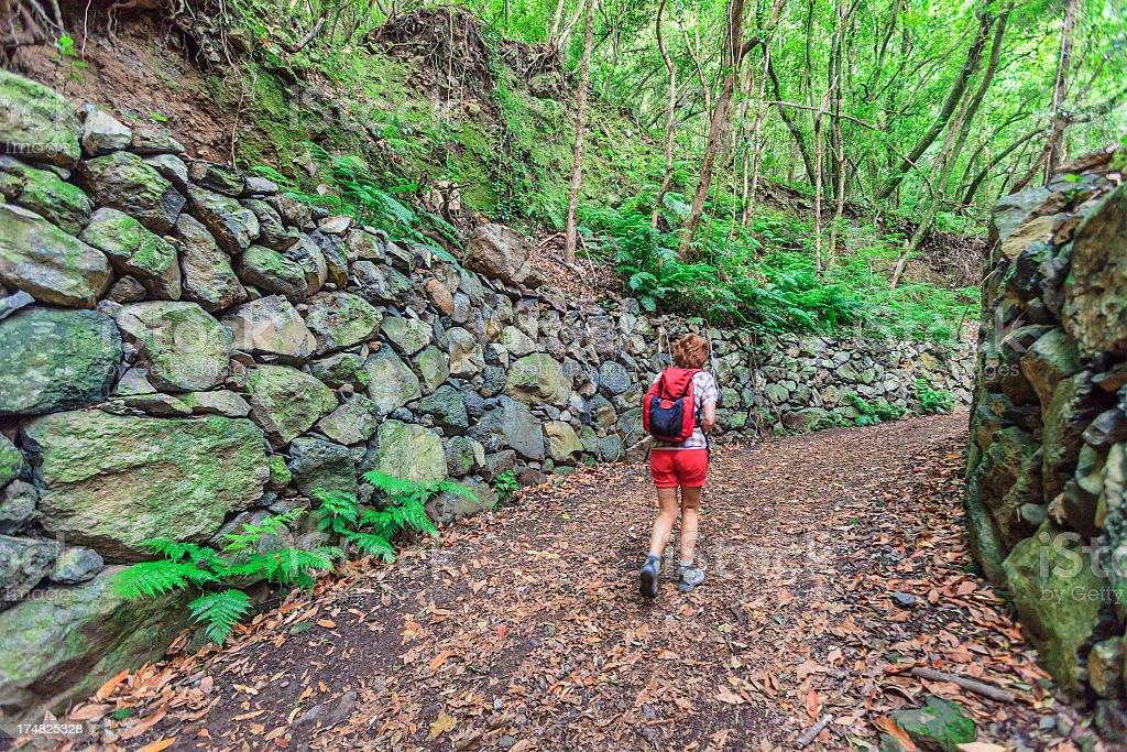 Footpath in Los Tilos Reserve, La Palma royalty-free stock photo