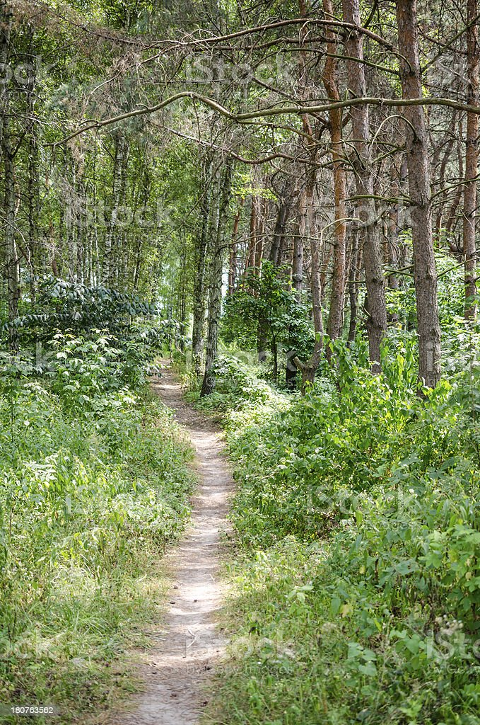 Footpath in summer forest royalty-free stock photo