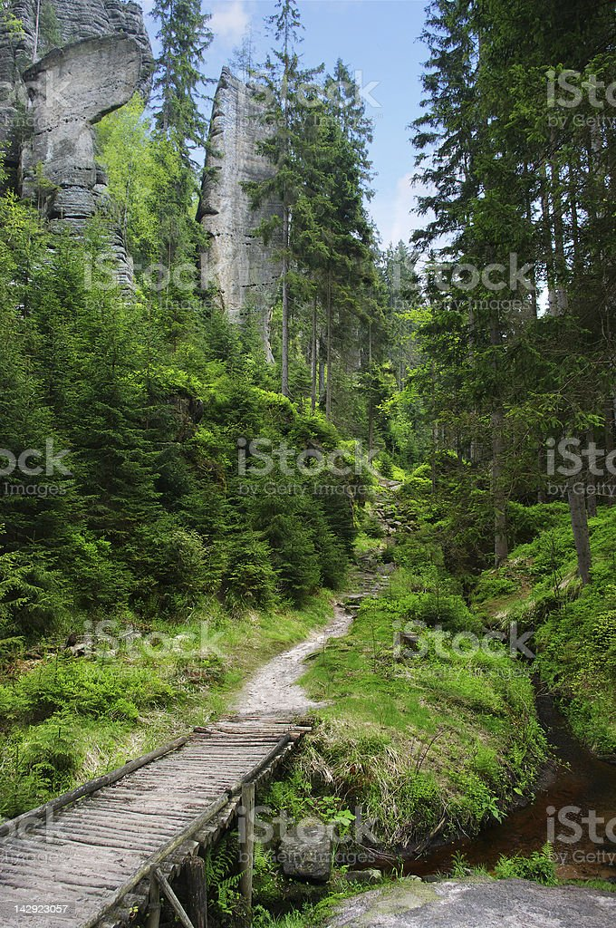 Footpath in the forest royalty-free stock photo