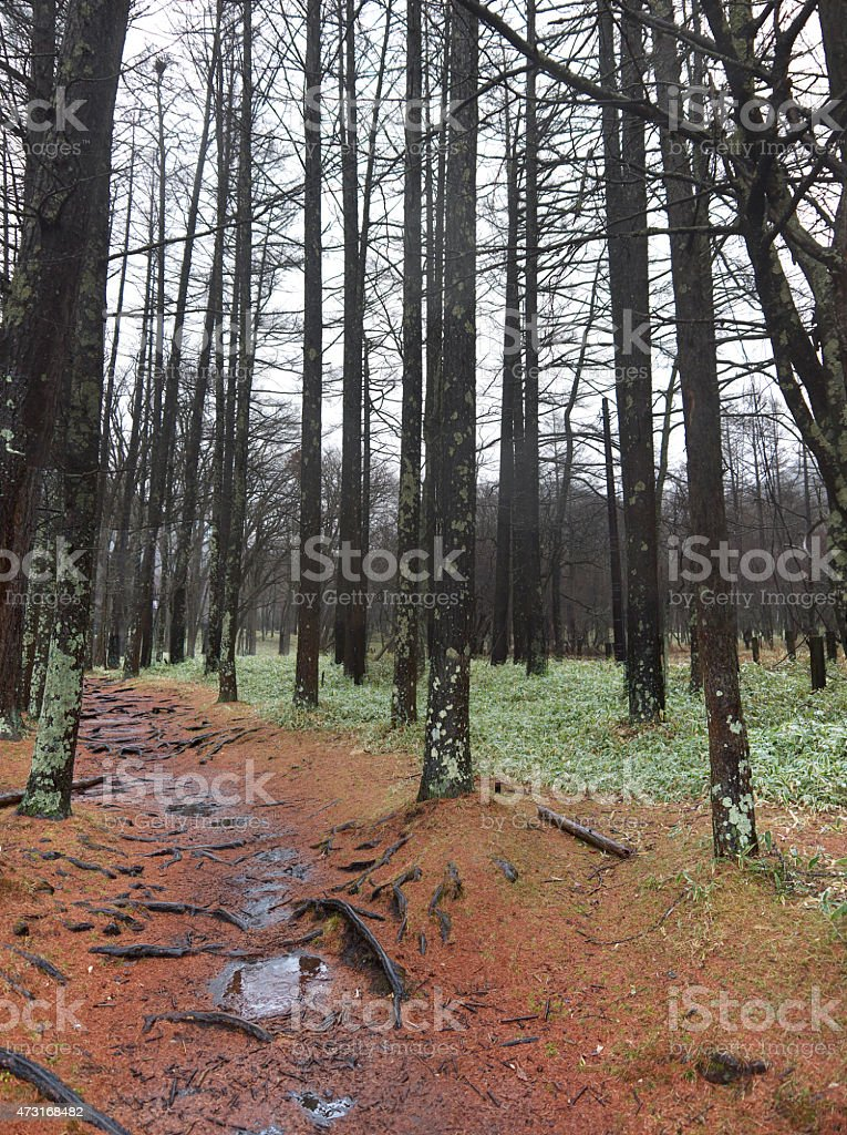 Footpath in the forest stock photo